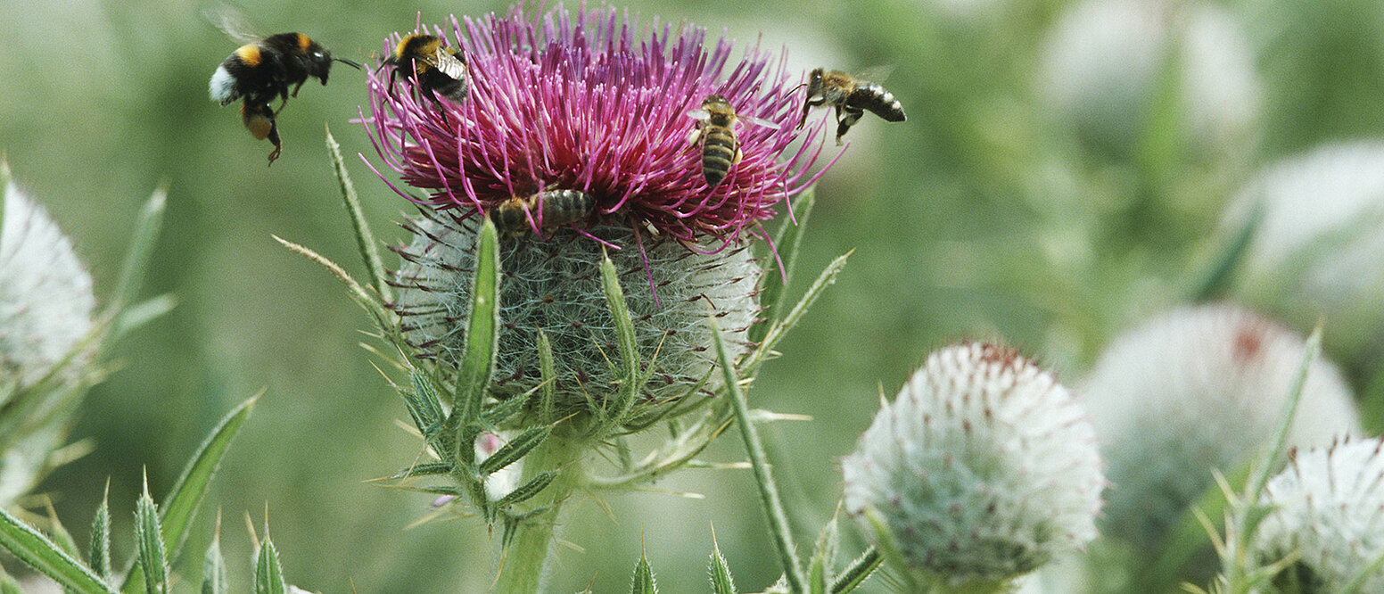 Biologische Vielfalt & Naturschutz
